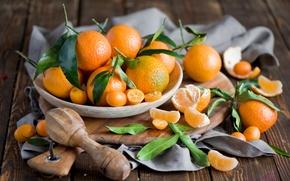 Picture winter, leaves, plate, Board, fruit, still life, orange, citrus, slices, peel, tangerines, Anna Verdina, kumquat