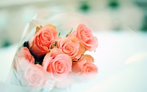 Wallpaper tenderness, roses, bouquet