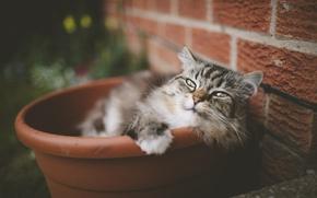 Picture cat, mustache, look, wool, pot