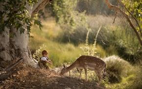 Picture nature, boy, deer