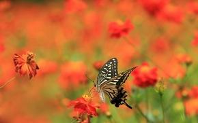 Wallpaper summer, flowers, butterfly