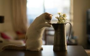 Picture flowers, table, Hannah, kitty, © Benjamin Torode, cat
