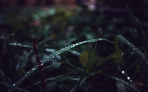 Picture greens, autumn, grass, drops, Russia, macro, dobraatebe
