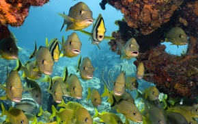 Picture sea, fish, corals, Underwater world, tropical fish