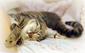 Picture cat, stay, sleep, pug