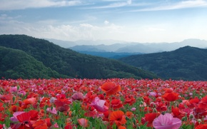 Picture trees, landscape, flowers, mountains, nature, Maki, meadow