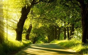 Picture road, forest, light, Moment of Silence