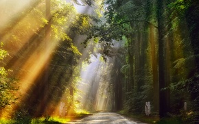 Picture road, forest, summer, rays, light, morning, Netherlands, June, Golden lights