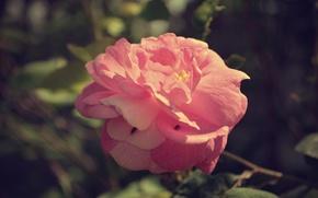 Picture flower, macro, rosette