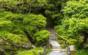 Picture greens, trees, bridge, stream, foliage