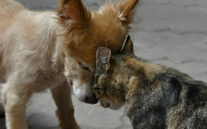 Picture cat, Dog, friendship, friends