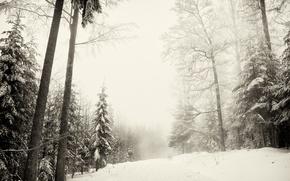 Picture winter, forest, snow, nature, Sumava national Park, winter Sumava