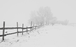 Picture winter, road, snow, frost, Nature, Blizzard, road, blizzard, winter, snow, frost
