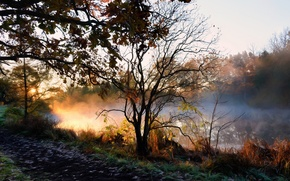 Picture autumn, fog, river, morning