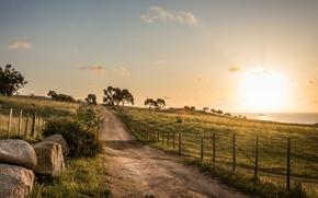 Wallpaper road, trees, field, morning