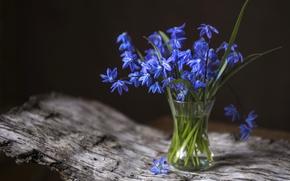 Picture spring, primrose, Scilla