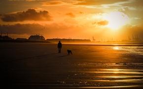 Picture sea, people, dog, walk