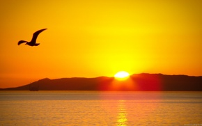 Picture sea, the sun, bird, sunset In mountains