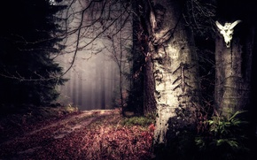 Picture road, forest, trees, skull, secret woods