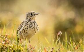 Picture grass, glare, bird, meadow