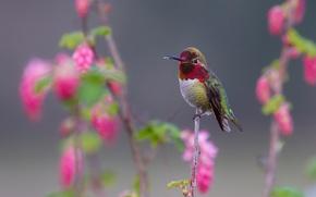 Picture bird, branch, feathers, beak, Hummingbird