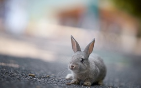 Picture rabbit, background, nature