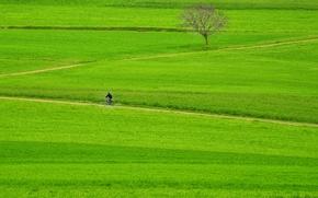 Wallpaper farmland, way, green, grass, path, rider, tree, bike, fields, pathway, man, countryside