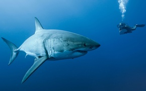 Picture diver, shark, Oceans
