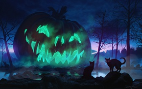 Picture cats, night, holiday, pumpkin, Halloween