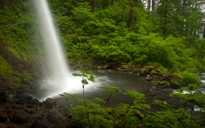 Picture forest, waterfall, stream, Oregon, Oregon, Columbia River, the Columbia river, Ponytail Falls