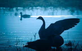 Picture water, nature, bird, wings, beak