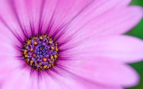 Picture pink, gentle, petals, serdtsevidna