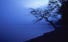 Wallpaper tree, shore, blue