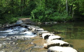 Picture forest, nature, river, trail