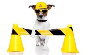 Wallpaper dog, humor, yellow, glasses, white background, helmet, Jack Russell Terrier, traffic cones