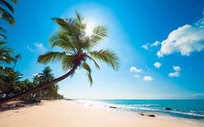 Picture beach, tropics, palm trees, the ocean, shore