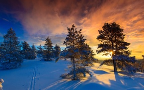Picture winter, snow, frost, Norway, and the sun, Naglestadheia, a wonderful day