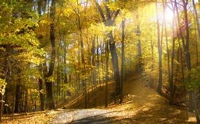 Wallpaper the sun, Ohio, autumn