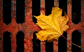 Picture autumn, leaves, macro, yellow, sheet, leaf, color, grille, rust, grid, autumn, leaves, macro, color, colour, …