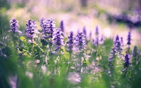 Wallpaper field, summer, the sun, flowers, nature, background, Wallpaper, glade, flowering