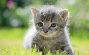 Wallpaper bokeh, baby, kitty