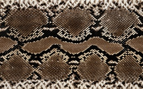 Picture snakes, leather, colors, texture