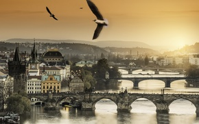 Picture sunset, birds, Prague