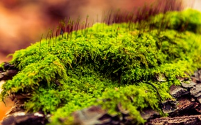 Picture grass, macro, nature, moss