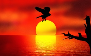 Picture sunset, reflection, bird, Holding the SUN