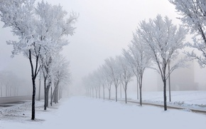 Picture winter, road, snow, trees, nature, fog, alley