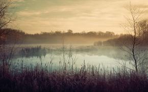 Picture autumn, fog, lake, plants