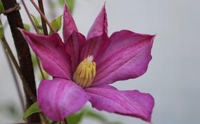 Picture flower, purple, petals, village