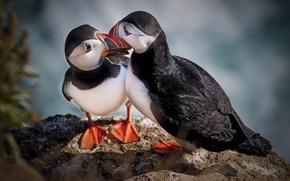 Picture eyes, stone, Birds, Rio, are, views, beaks
