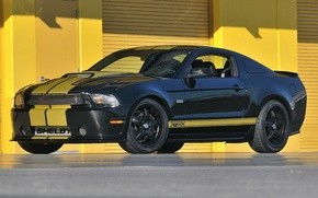 Picture Shelby, Edition, Anniversary, 50th